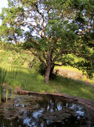The pond at Sky Farm